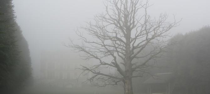 Misty run